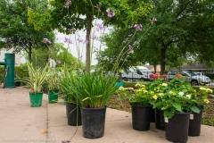 bomd-2019-westbury-park-clean-up-4062