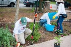 bomd-2019-westbury-park-clean-up-8775