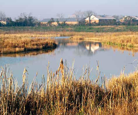 Willow_Waterhole_Park